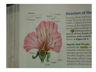 Pages 612-615  For labeling Flowers/Parts of Flowers prior to  Flower Dissection  Lab