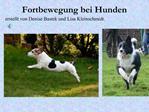 Fortbewegung bei Hunden
