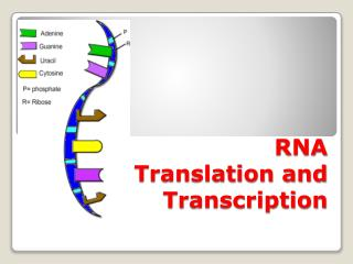 RNA Translation and  Transcription