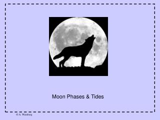 Moon Phases & Tides