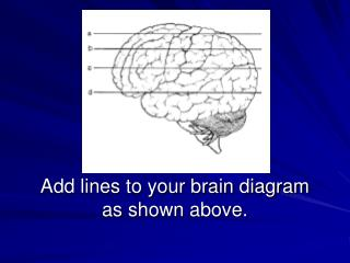 Add lines to your brain diagram as shown above.