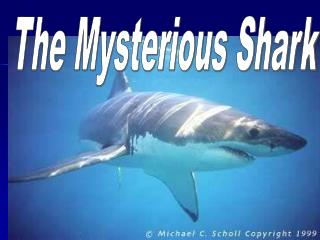 The Mysterious Shark