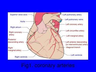Fig1. coronary arteries