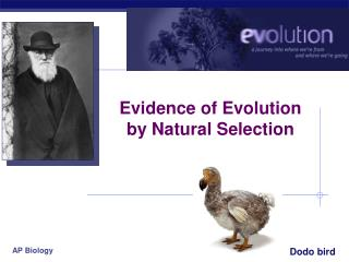 Evidence of Evolution by Natural Selection