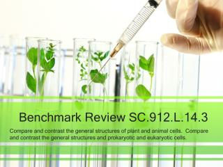 Benchmark Review SC.912.L.14.3