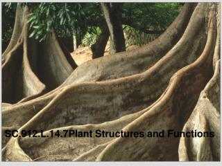 SC.912.L.14.7Plant Structures and Functions