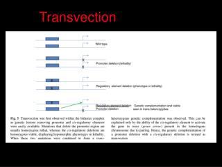 Transvection