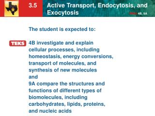 The student is expected to: 4B investigate and explain cellular processes, including