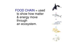 FOOD CHAIN  = used to show how matter & energy move through                     an ecosystem.