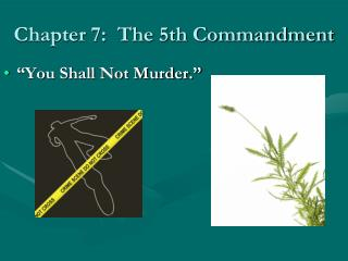 Chapter 7:  The 5th Commandment