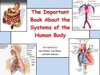 The Important  Book About the  Systems of the  Human Body  Text Modified by: