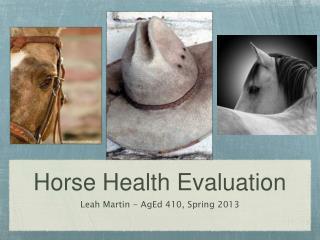 Horse Health Evaluation