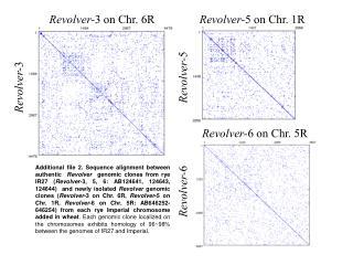 Revolver- 3 on Chr. 6R