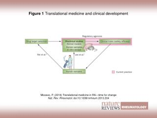Figure 1  Translational medicine and clinical development