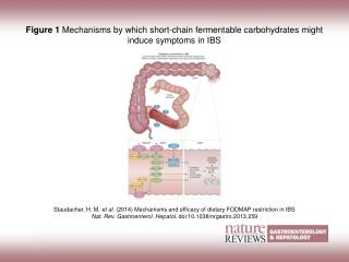 Figure 1  Mechanisms by which short-chain fermentable carbohydrates might induce symptoms in IBS