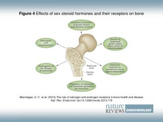 Figure 4  Effects of sex steroid hormones and their receptors on bone