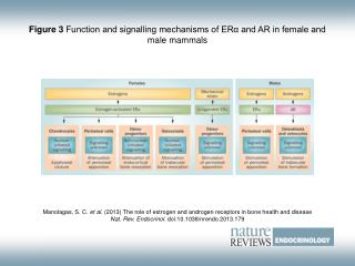 Figure 3  Function and signalling mechanisms of ERα and AR in female and male mammals