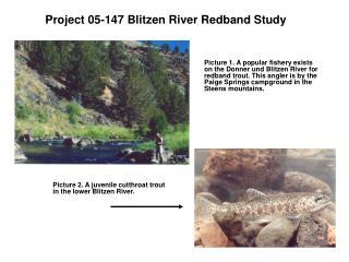 Project 05-147 Blitzen River Redband Study
