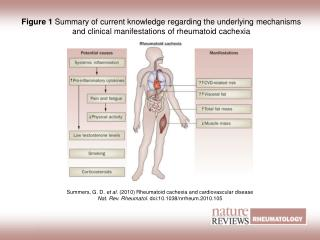 Figure 1  Summary of current knowledge regarding the underlying mechanisms