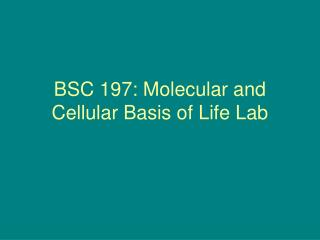 BSC 197: Molecular and Cellular Basis of Life Lab
