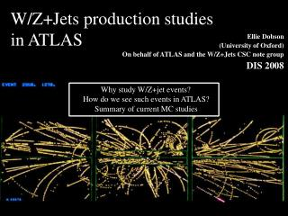 W/Z+Jets production studies  in ATLAS