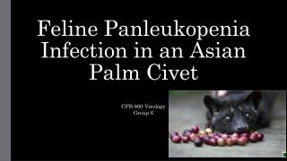 Feline  Panleukopenia Infection in an Asian Palm Civet