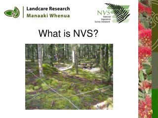What is NVS?