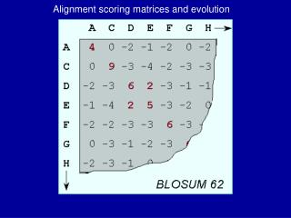 Alignment scoring matrices and evolution