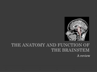 The Anatomy and Function of the Brainstem