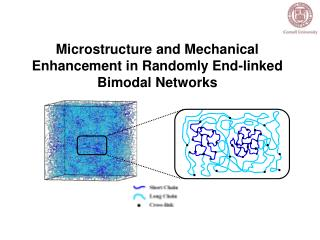 Microstructure and Mechanical Enhancement in Randomly End-linked Bimodal Networks