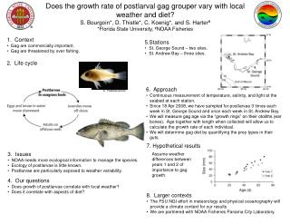 Does the growth rate of postlarval gag grouper vary with local weather and diet?