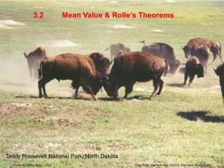 Mean Value & Rolle's Theorems