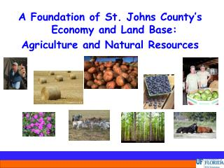 A Foundation of St. Johns County's Economy and Land Base: Agriculture and Natural Resources