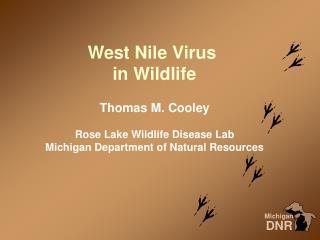 West Nile Virus  in Wildlife