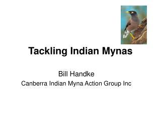 Tackling Indian Mynas