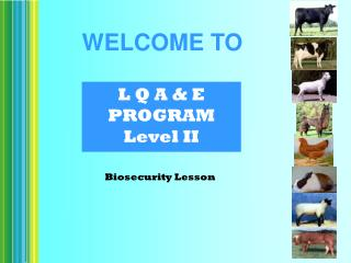 L Q A & E PROGRAM Level II