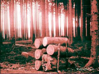 Waldwirtschaft