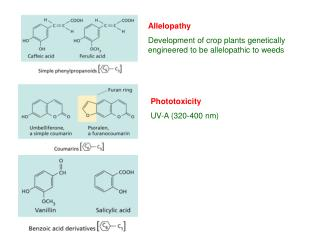Allelopathy Development of crop plants genetically engineered to be allelopathic to weeds