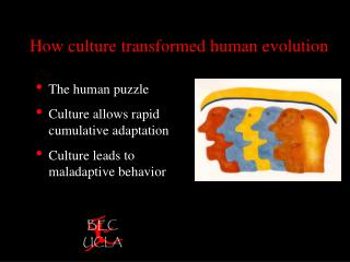 How culture transformed human evolution