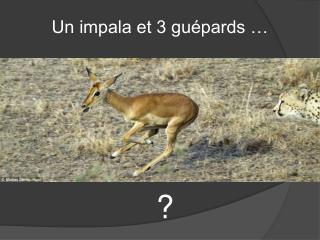 Un impala et 3 gu pards