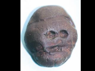 Neo paleolithic