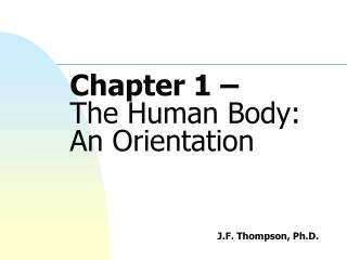 Chapter 1 –  The Human Body:  An Orientation