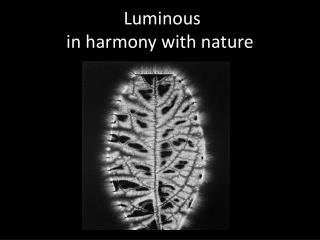 Luminous  in harmony with nature
