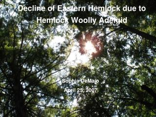 Decline of Eastern Hemlock due to Hemlock Woolly Adelgid