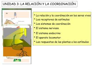 UNIDAD 3: LA RELACIÓN Y LA COORDINACIÓN