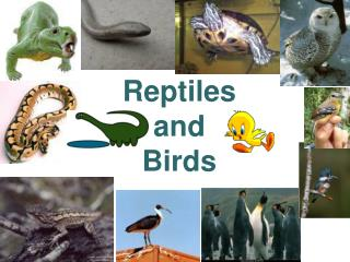 Reptiles  and  Birds