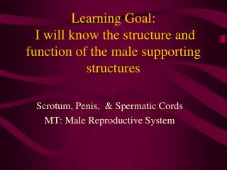 Learning Goal:    I will know the structure and function of the male supporting structures