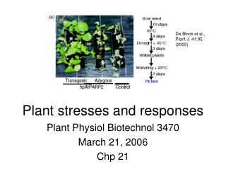 Plant stresses and responses