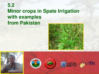 5.2 Minor crops in Spate Irrigation with examples from Pakistan