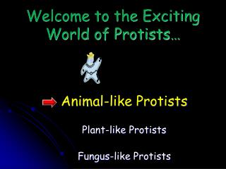 Welcome to the Exciting World of Protists…